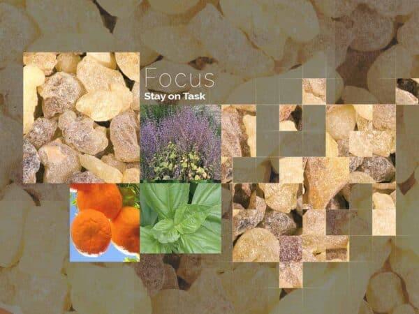 Focus by DeRu Extracts